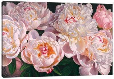 Panoram of Peonies II Canvas Art Print