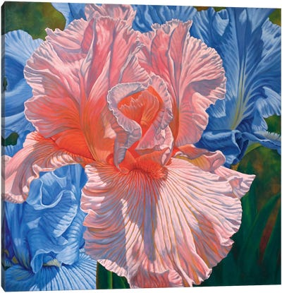 Floralscape I - Pink and Blue Irises Canvas Art Print
