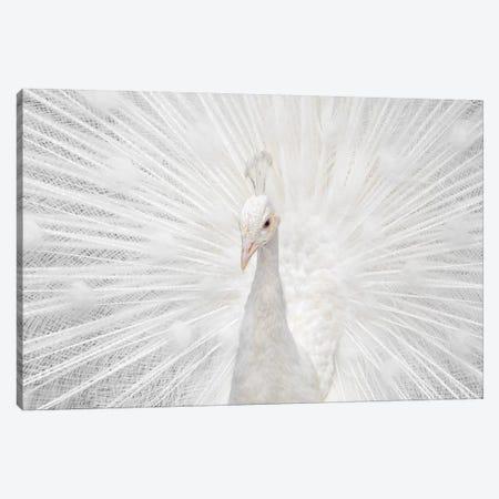 Splendid Whitie Canvas Print #FEG7} by Fegari Canvas Artwork