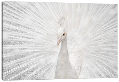 Splendid Whitie Canvas Art Print