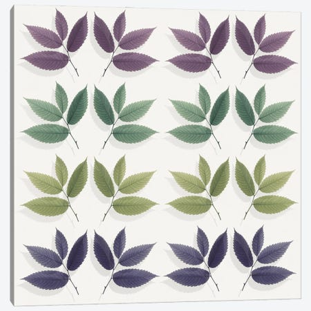 Calming Hornbeam Leaf Pattern Canvas Print #FEN105} by Alyson Fennell Art Print