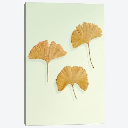 Golden Ginkgo Leaf Trio Canvas Print #FEN106} by Alyson Fennell Canvas Print