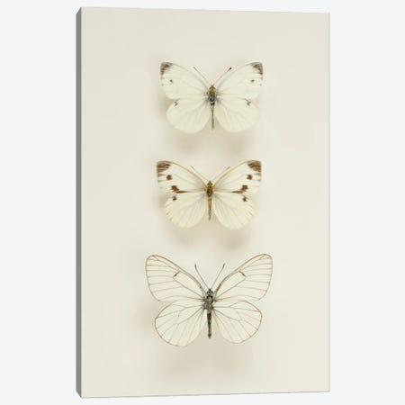 Three White Butterflies Canvas Print #FEN107} by Alyson Fennell Art Print