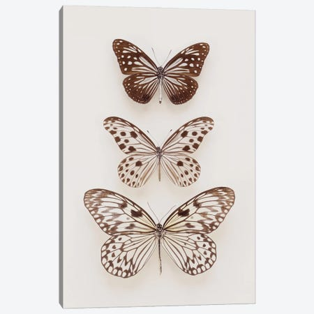 Three Neutral Butterflies Canvas Print #FEN108} by Alyson Fennell Canvas Art