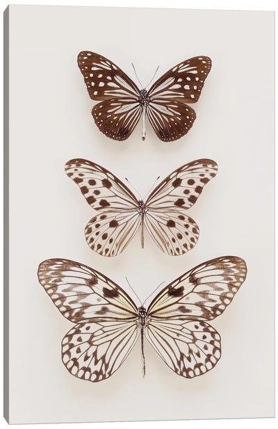 Three Neutral Butterflies Canvas Art Print