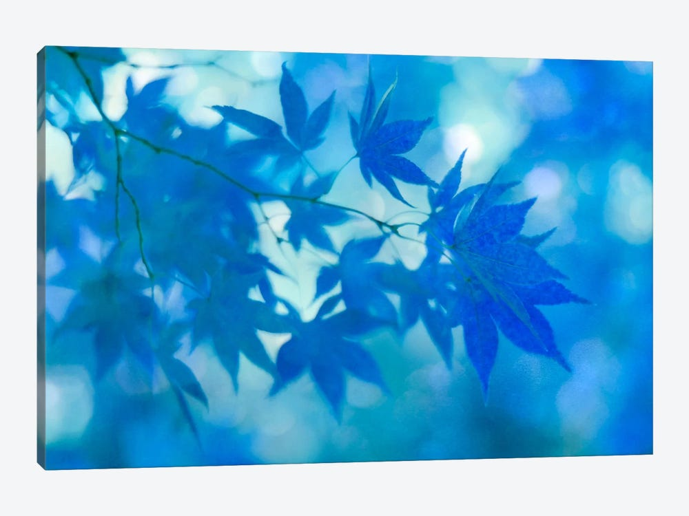 Blue Japanese Maple Leaves by Alyson Fennell 1-piece Canvas Art
