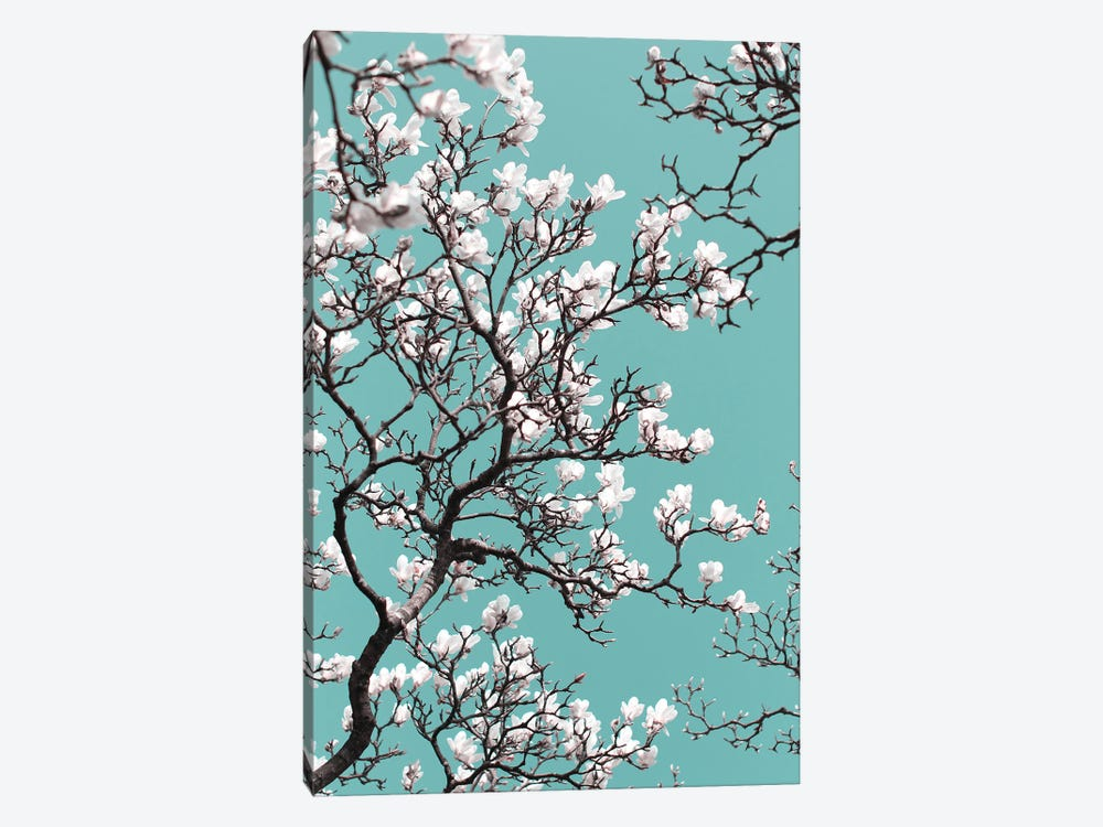 White Magnolia Blossom On Teal Sky by Alyson Fennell 1-piece Canvas Print