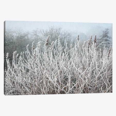 Frosty Morning Grasses Canvas Print #FEN111} by Alyson Fennell Canvas Art Print