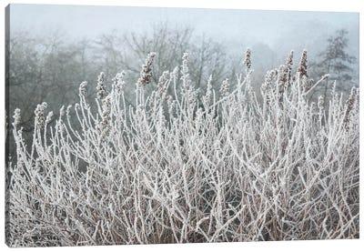 Frosty Morning Grasses Canvas Art Print