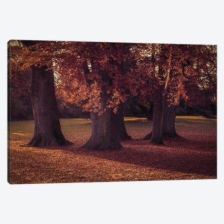 Three Autumn Trees Canvas Print #FEN112} by Alyson Fennell Canvas Print