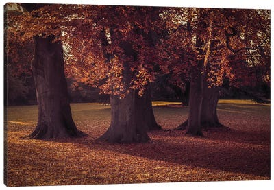 Three Autumn Trees Canvas Art Print