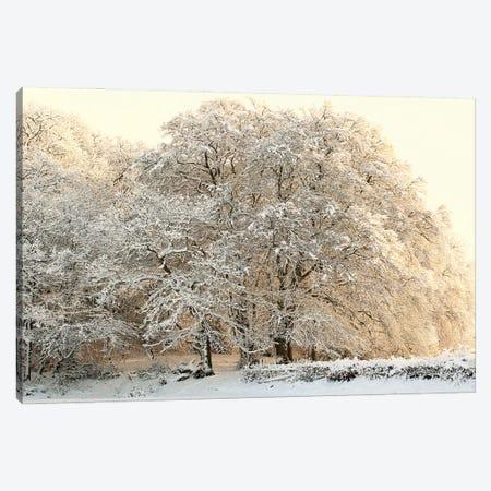 Snowy Winter Trees Canvas Print #FEN113} by Alyson Fennell Canvas Art Print