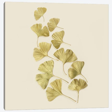 Gold Ginkgo Leaves Canvas Print #FEN114} by Alyson Fennell Canvas Wall Art