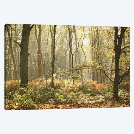 Autumn Morning Woodland Canvas Print #FEN115} by Alyson Fennell Canvas Wall Art