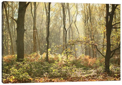 Autumn Morning Woodland Canvas Art Print