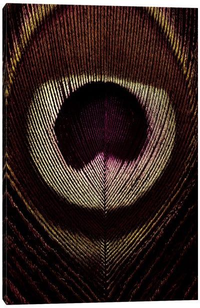 Bronze Peacock Feather Canvas Art Print