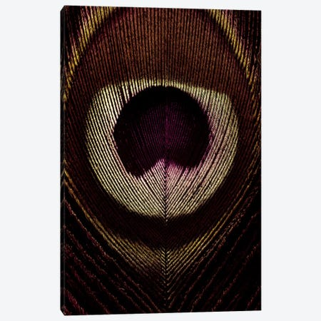 Bronze Peacock Feather Canvas Print #FEN11} by Alyson Fennell Canvas Wall Art