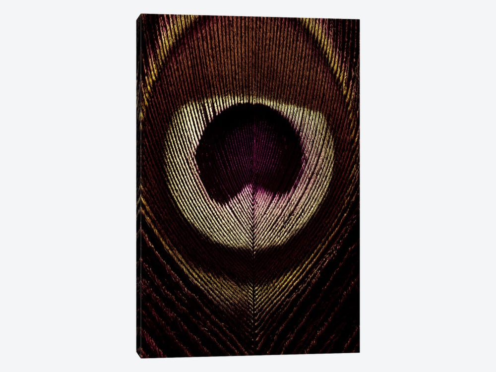 Bronze Peacock Feather by Alyson Fennell 1-piece Canvas Art Print