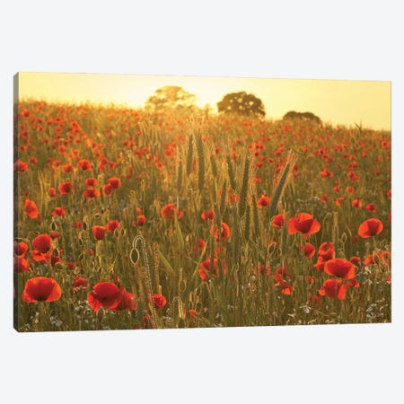 Summer Poppy Meadow Canvas Print #FEN120} by Alyson Fennell Canvas Art