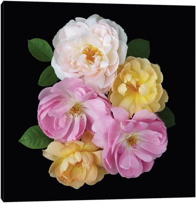 English Rose Design Canvas Art Print