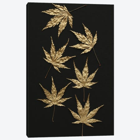 Gold Japanese Maple Leaves Canvas Print #FEN123} by Alyson Fennell Canvas Wall Art