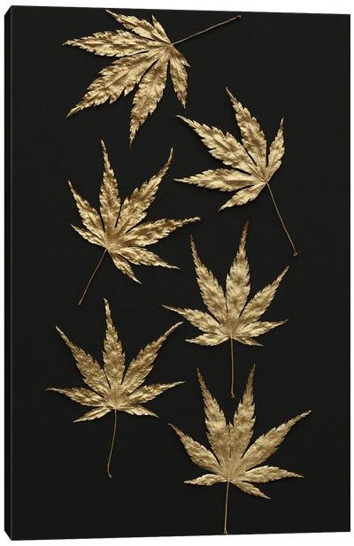 Gold Japanese Maple Leaves Canvas Art Print