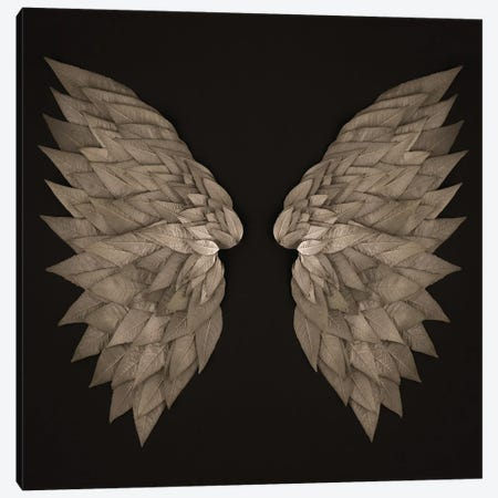 Buddleia Angel Wings Canvas Print #FEN125} by Alyson Fennell Canvas Print