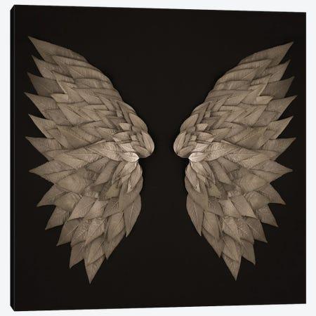Buddleia Angel Wings Canvas Print #FEN125} by Alyson Fennell Canvas Print