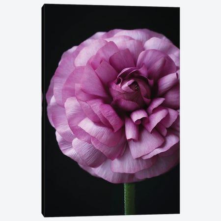 Lollipop Flower Canvas Print #FEN127} by Alyson Fennell Canvas Print