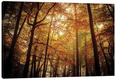 Foggy Autumn Beech Trees Canvas Art Print