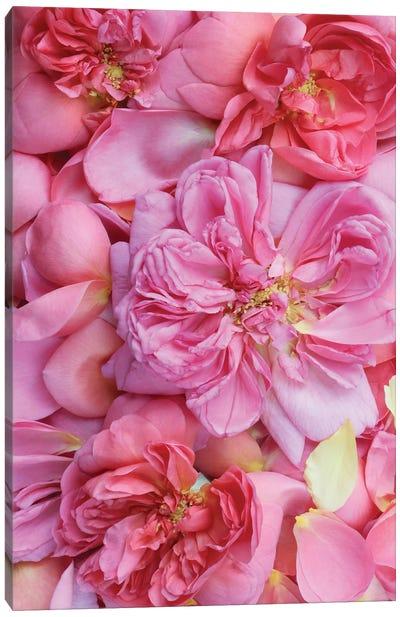 Pink English Rose Petals Ii Canvas Art Print