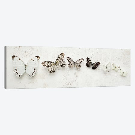 Dancing Speckled Butterflies Canvas Print #FEN148} by Alyson Fennell Canvas Wall Art