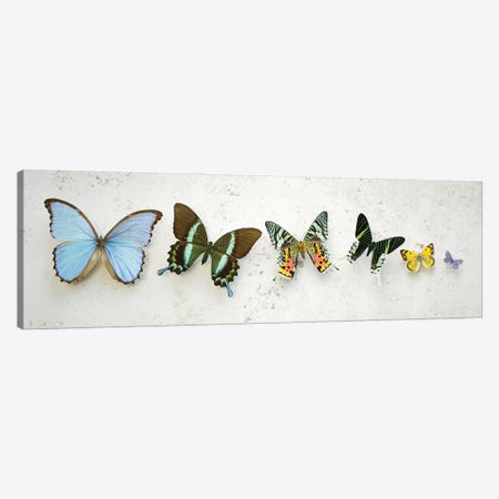 Bright Dancing Butterflies Canvas Print #FEN149} by Alyson Fennell Canvas Wall Art