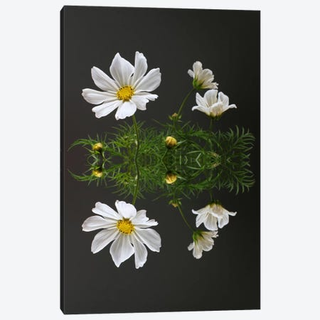 Cosmos Flower Reflection Canvas Print #FEN18} by Alyson Fennell Canvas Artwork