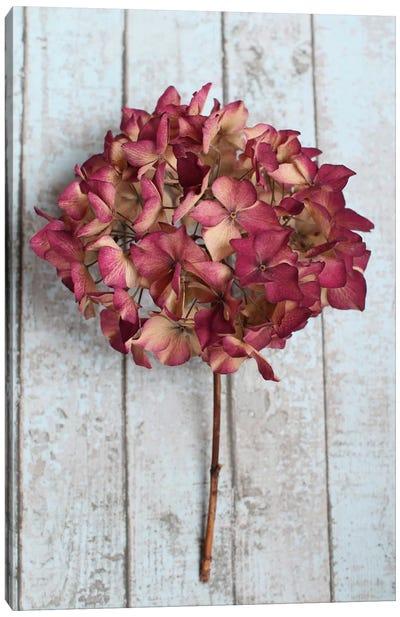 Deep Pink Hydrangea Flower Canvas Art Print