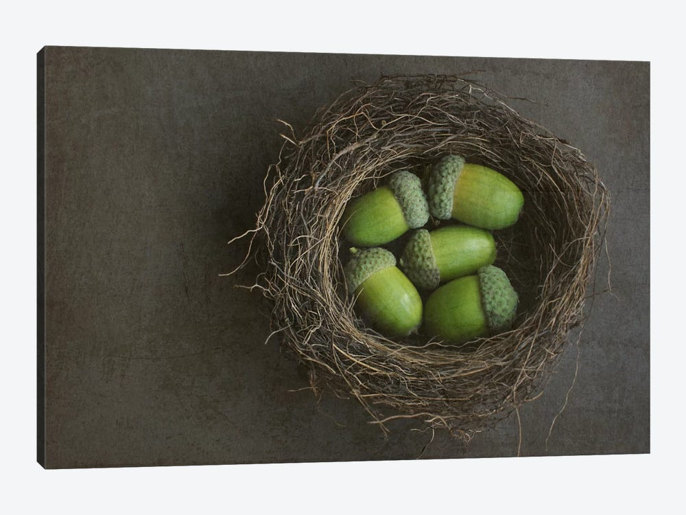 Acorns In Nest 1-piece Canvas Wall Art
