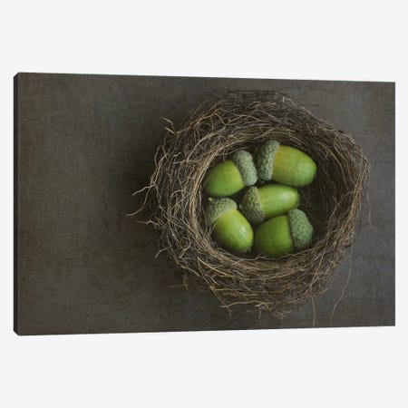Acorns In Nest 3-Piece Canvas #FEN1} by Alyson Fennell Canvas Artwork