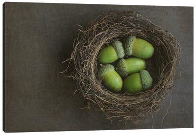 Acorns In Nest Canvas Art Print