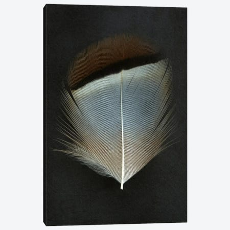 French Partridge Feather 3-Piece Canvas #FEN21} by Alyson Fennell Canvas Print