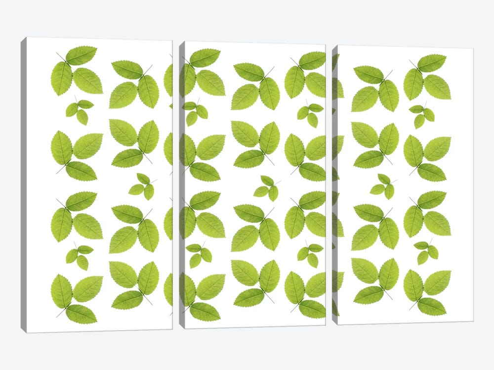 Green Ash Leaves by Alyson Fennell 3-piece Canvas Art