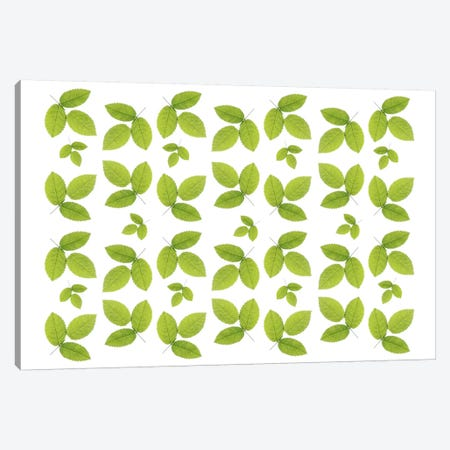 Green Ash Leaves Canvas Print #FEN23} by Alyson Fennell Canvas Art Print