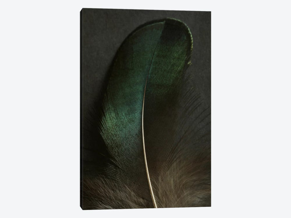 Green Peacock Feather Closeup by Alyson Fennell 1-piece Art Print