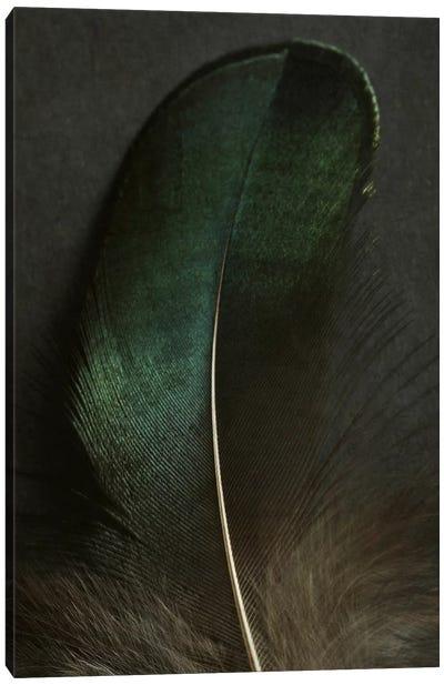 Green Peacock Feather Closeup Canvas Art Print