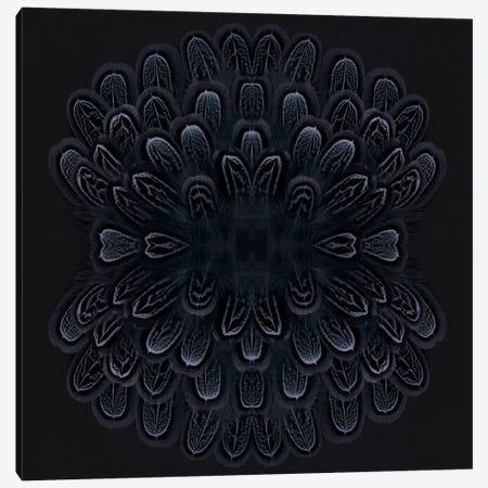 Grey Feather Explosion Canvas Print #FEN25} by Alyson Fennell Canvas Wall Art