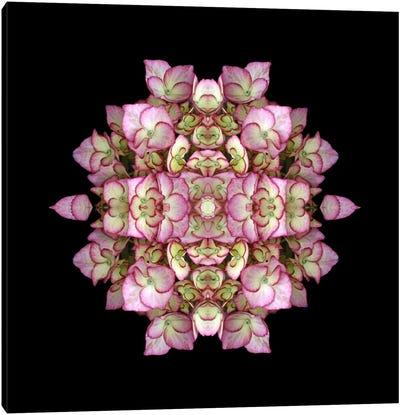 Hydrangea Symmetry Canvas Art Print