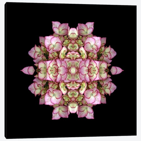 Hydrangea Symmetry Canvas Print #FEN28} by Alyson Fennell Canvas Print