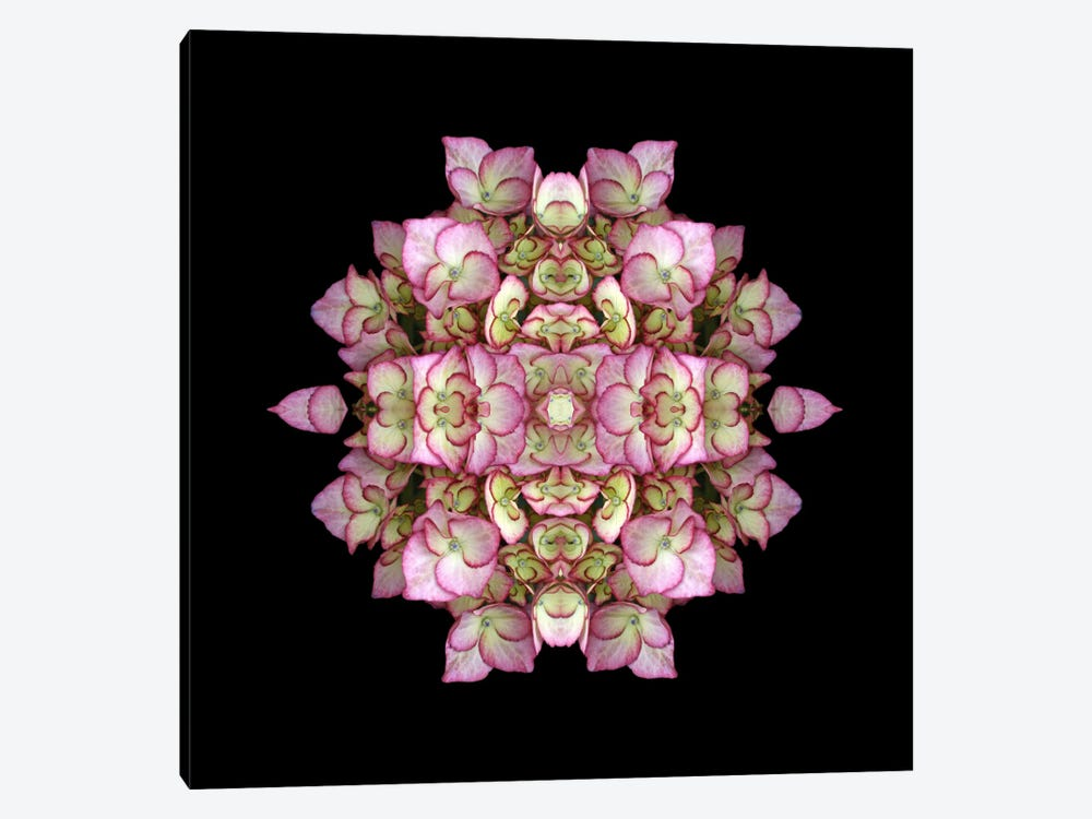 Hydrangea Symmetry by Alyson Fennell 1-piece Canvas Art Print