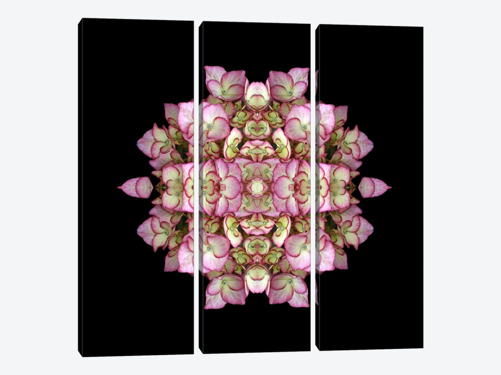 Hydrangea Symmetry by Alyson Fennell 3-piece Canvas Print