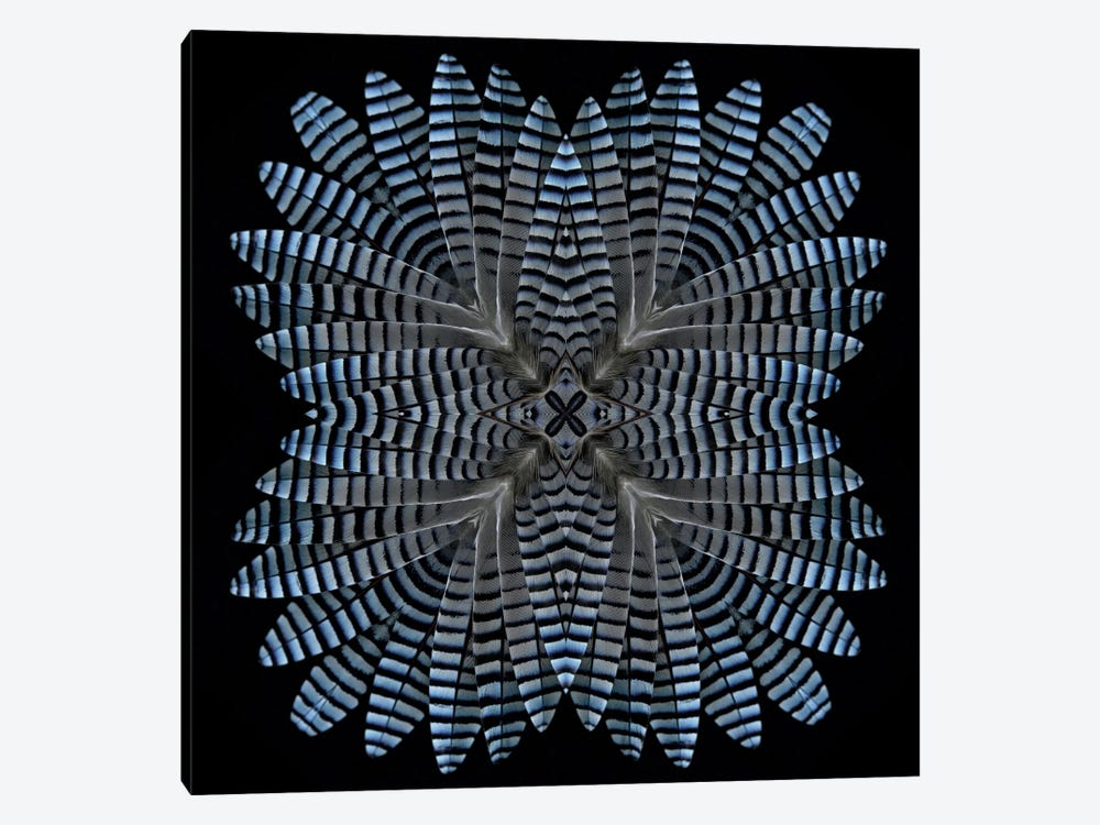 Jay Feather Star by Alyson Fennell 1-piece Canvas Artwork
