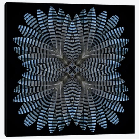 Jay Feather Star Canvas Print #FEN29} by Alyson Fennell Art Print